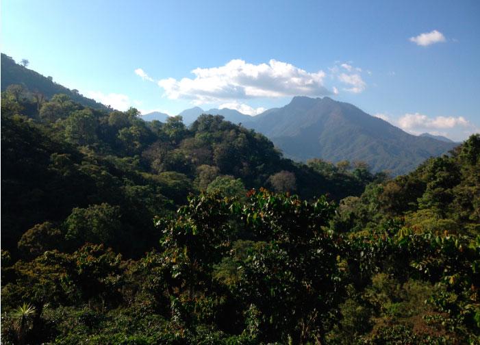 Мексика Чьяпас